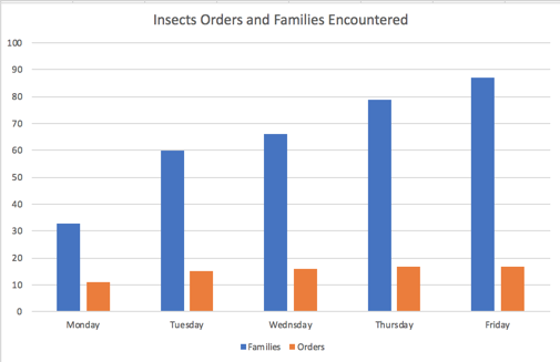 Diversity of insects discovered at Sun Foundation during the week.