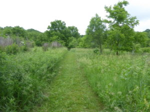 Old pasture with many woody plants present