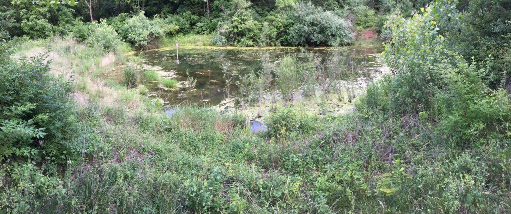 Panorimic view of smaller pond